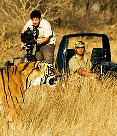 Tiger safari - Panna National Park